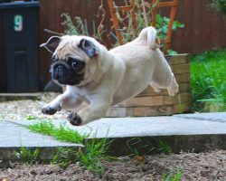 Be Enchanted by Perfectly Timed Photos of Levitating Doggies