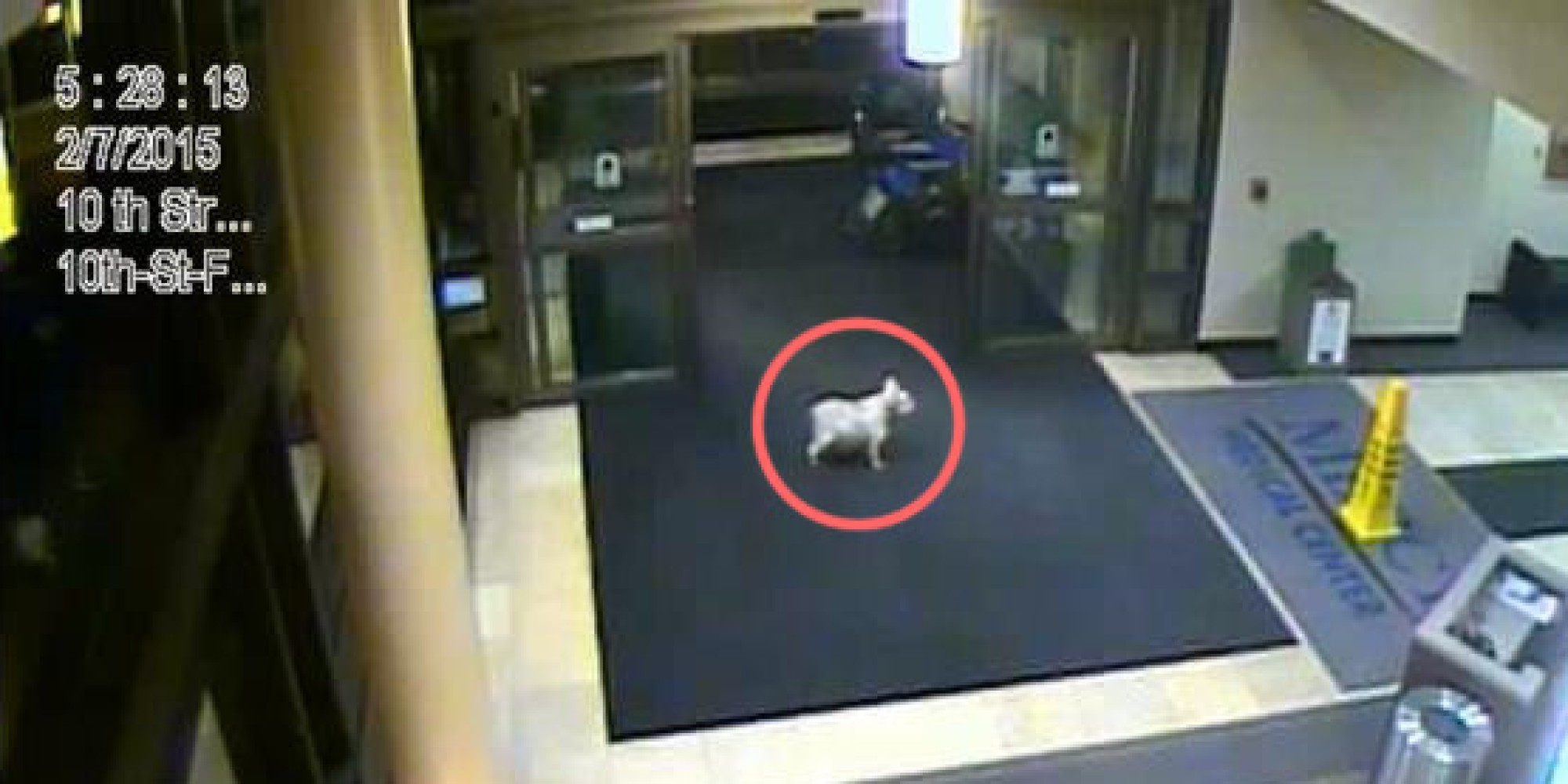 dog-escapes-from-home-sneaks-into-hospital