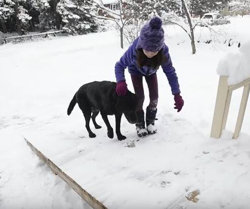 dog-on-ramp