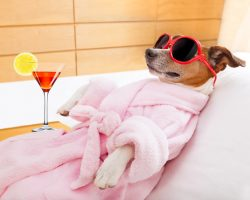 Elaborate Ways Today's Pooch Seriously Gets the Royal Treatment