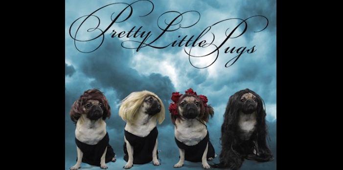 pretty-little-pugs