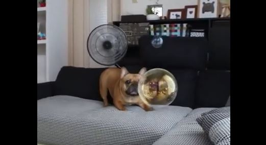pup-and-bubble