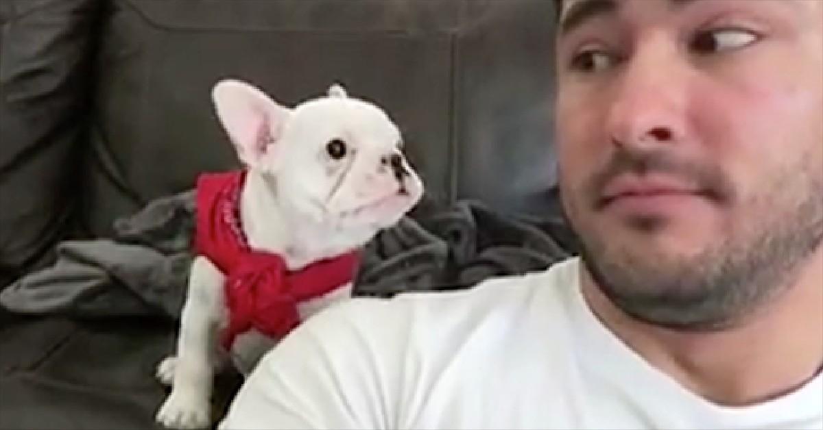 puppy-looks-handsome