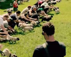 "(Video) ""Running of the Pugs"" is the Most Ridiculously Adorable Thing We've Ever Seen!"