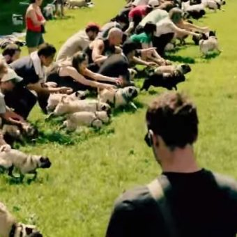 "(Video) ""Running of the Pugs"" is the Most Ridiculously Adorable Thing I've Ever Seen!"