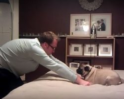 "(Video) This Dad and Pug Get Into a ""Fight"" and How They Resolve it is Adorable!"
