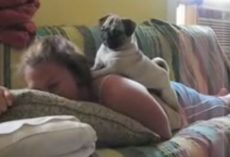 (Video) When Mom Frightens Her Pug, Keep Eyes on the Dog to See How He Responds – So Feisty!