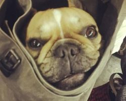 NYC Subway Bans Dogs Unless They Fit Into a Bag. Now See How Big Dog Owners Amazingly Accepted the Challenge.