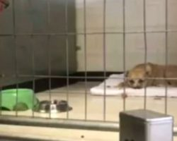 (Video) Shelter Dog Was too Depressed to Move — Until a Special Stranger Showed Up