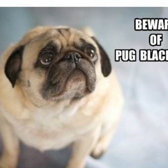 10 Dog Memes That Are SO Funny We Can't Stop Laughing!