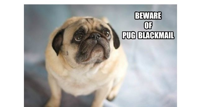 pug-blackmail
