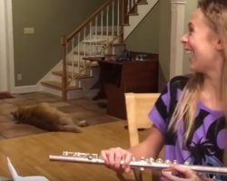 (Video) Girl is Trying to Play the Flute, But Her Dog is Not Having It
