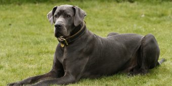 6 of the World's Largest Dogs Are Hard to Believe