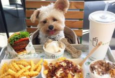 Adorable Rescue Pup Called Popeye Eats Better Than Us!
