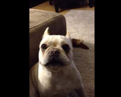 (Video) Mom Asks Bruley the Frenchie How His Day Was. He Says it Was Pretty Rough! Just Listen:
