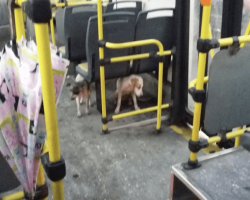 Bus Driver Sees Dogs Freezing Due to Storm So He Decides to Break the Rules by Bringing Them Onto the Bus