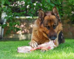 Dogs Love Bones, But When Giving Them to Fido It's Vital to Avoid THIS Mistake