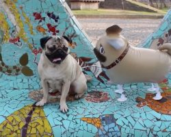 (Video) He May be Full of Hot Air But Doug the Pug Adores Him Anyway