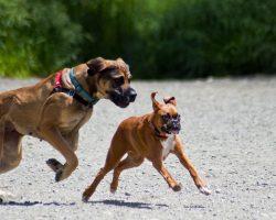 How to Tell if a Dog is a Bully and What to Do About It
