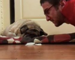 (Video) This Family's Pug is Blind, But Watch Their Special Way of Waking Him Up…