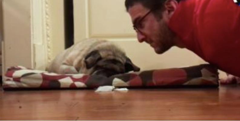 pug blind
