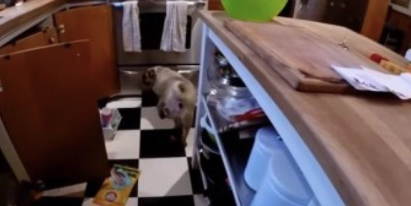 pug kitchen