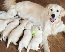 (Video) Dog Gave Birth to a New Litter of Puppies. When the Owner Looked Closer at One Puppy, She FROZE