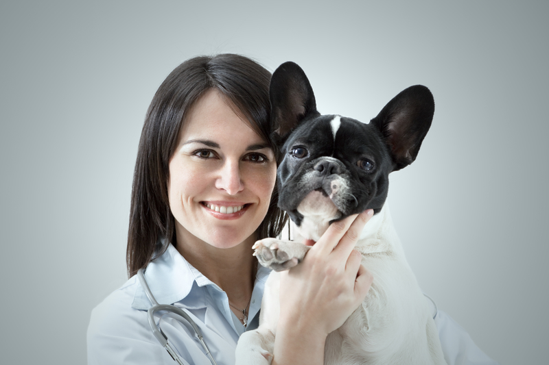 woman holding a Frenchie