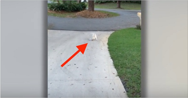 dog on driveway