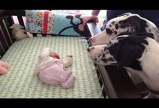 (Video) Parents Introduce Their Dogs to the New Baby and How They Respond is Rather Beautiful