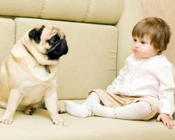 Is a Doggy More Human Than Dog? The Truth is Shocking!