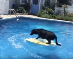 (Video) Smarty Pants Pooch Jumps Onto a Surfboard to Retrieve This Precious Item…