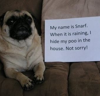 Pug Shaming Photos That Are Making Us Roll on the Floor Laughing – No, We're Not Kidding!