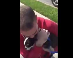 (Video) Watch an Emotional Moment When an Ecstatic Pooch Reunites With Her Owner – Aww!