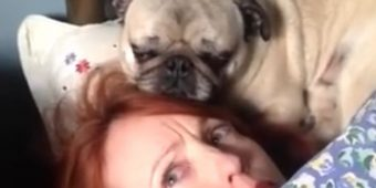 (Video) This Woman Has a Pug Stalker and She's Terrified for Her Life – LOL!