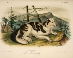 10 Extinct Dog Breeds So Unique That We Wish They Still Existed Today