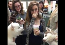 (Video) Two Puppies Interact During a Meet and Greet. The Result? Cutest Convo EVER!