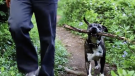 (Video) No One Wanted this Elderly Shelter Dog Until He Showed Up and Gained a Best Friend