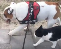 (Video) Doggy Has a Feline Tag Along During a Walk and How She Begs Him for More Attention is Priceless!