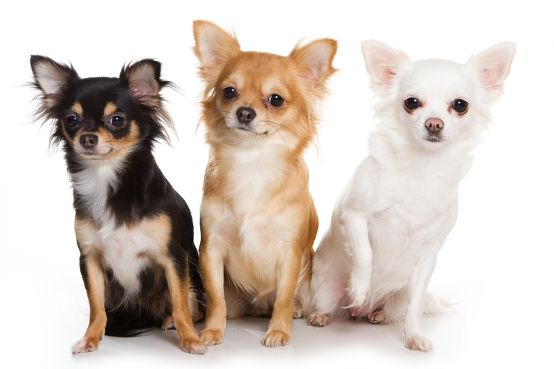 smaller dogs