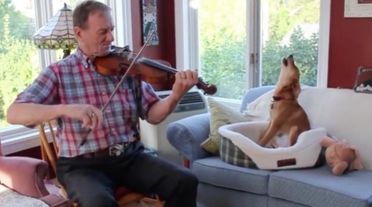 fiddle dog