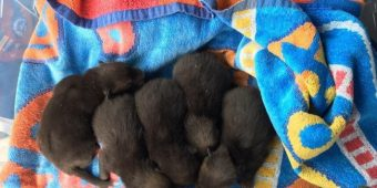 Man Discovers 5 Abandoned Puppies, Later Realizes They're Something Entirely Different