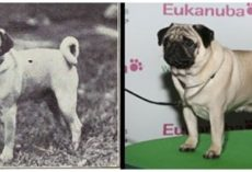 How 100 Years of Breeding Has Changed These 5 Well-Known Dog Breeds