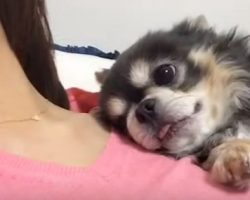 (Video) Doggy Has Special Way of Sleeping With Mom That's Making Everyone Jealous