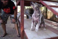 (Video) When Realizing He's Going to be Adopted, Dog Performs Epic Happy Dance