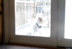 (Video) Dog Does the Best Thing EVER When She Wants to be Let Back Inside the House