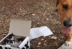 (Video) Dog Finds Box on the Side of the Road, Shortly After Becomes Foster Dad