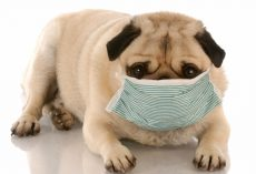 Extremely Contagious Dog Flu Outbreak Spreads to Several Dogs in Florida