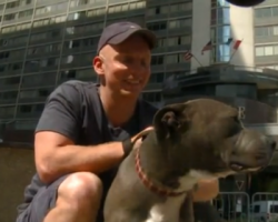 Cop Does the Most Tender-Hearted Thing for a Pit Bull Who Was Badly Hurt by Owner