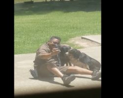 (Video) Mom Looks Outside and Catches the UPS Guy Doing THIS With Her Dogs
